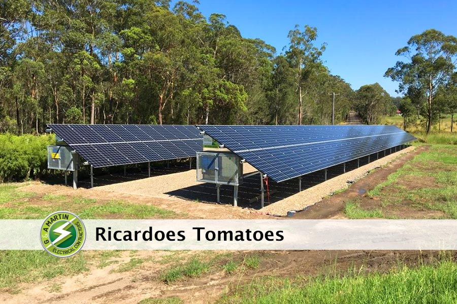 Ricardoes Tomatoes